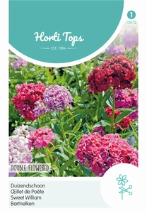Dianthus barbatus dubbelbloemig gemengd