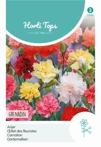 Dianthus Caryophyllus Grenadin Gemengd