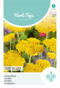 Achillea Filipendula Cloth Of Gold