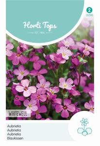 Aubrietia Hybrida Grfl.Whitewell Gem