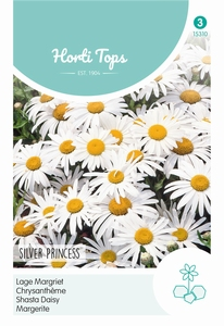 Chrysanthemum Max.Nanum Silver Princess