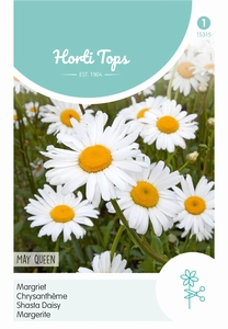 Chrysanthemum Vernale Leuc.May Queen