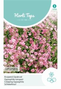 Gypsophila Repens Rose