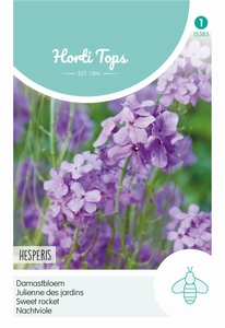 Hesperis Matronalis Violet (Damastbloem)
