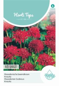 Knautia macedonica Red Knight