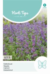 Nepeta mussinii (Kattekruid)