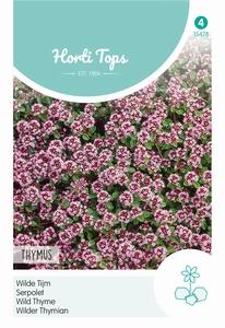 Thymus Serpyllum Purperrood