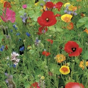 Wildebloemen mengsel      voor  50 m2  tot 100 m2 , inhoud  50 gram