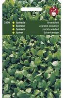 SPINAZIE breedblad zomer scherp zaad      50 gram