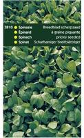 SPINAZIE breedblad zomer, scherp zaad  250 gram
