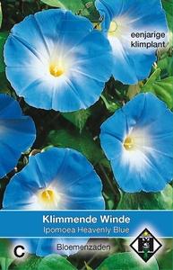 Ipomoea tricolor Heavenly Blue