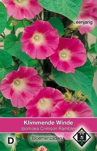 Ipomoea purpurea Crimson Rambler