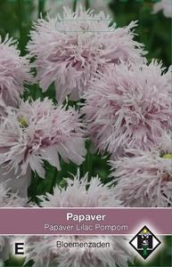 Papaver somniferum Lilac Pompom