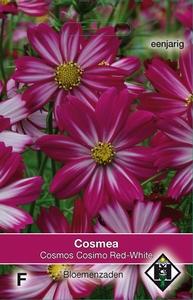 Cosmos bipinnatus Cosimo Red-White