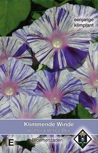 Ipomoea purpurea Venice Blue