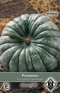 Cucurbita maxima Jarrahdale    (pompoenachtige)