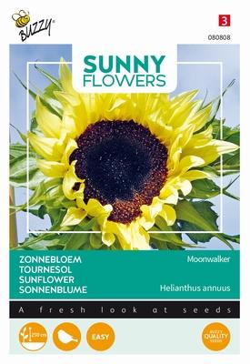 Helianthus zonnebloemen Moonwalker, ook vogelvoer 250cm hoog