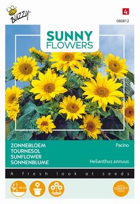 Helianthus zonnebloemen, Pacino gold, laag soort, 40cm hoog