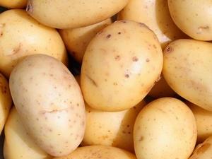 Eerstelingen zeer vroege aardappel, vastkoker 2,5 kg