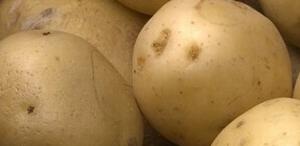 Lekkerlanders vroege aardappel, kruimelig 1 kg