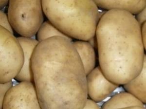 Obama zeer vroege aardappel, vastkoker  2,5 kg