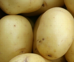 Nicola middelvroege aardappel, vastkoker 2,5 kg