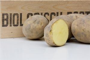 Bio aardappel,  Sevilla (geel) middenlaat, kruimig 1 kg