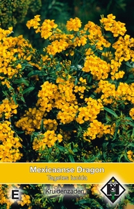 Mexicaans Dragon Tagetes Lucida