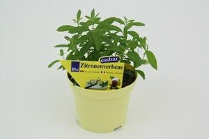 Kruidenplanten (het grootste assortiment van de regio) *BIO