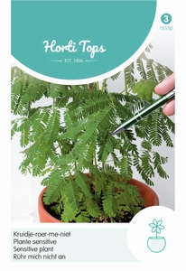 Mimosa Pudica (Kruidje-Roer-Me-Niet)