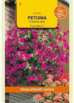 Petunia pendula Purple Wave F1 hybride gem. HANGEND