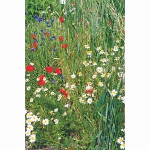 Weidebloemen mengsel     voor 50 m2   tot 100 m2 ,  inhoud  50 gram