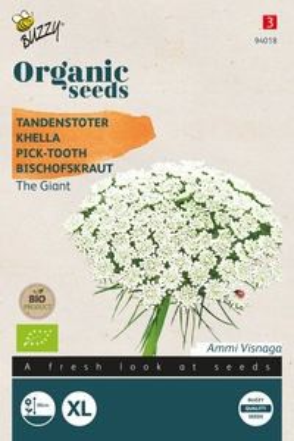 Bio Organic Ammi Visnagia The Giant  ( Tandenstoter )  NIEUW