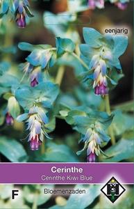 Cerinthe major Purpurescens Kiwi Blue