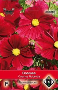 Cosmos bipinnatus Rubenza