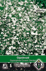 Gypsophila elegans Convent Garden