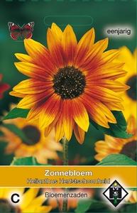 Helianthus a. Herfstschoonheid    Helianthus zonnebloemen