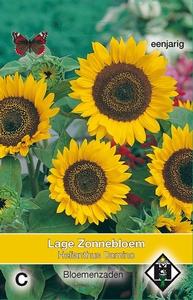 Helianthus a. Domino    Helianthus zonnebloemen