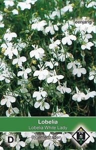 Lobelia erinus White Lady