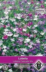 Lobelia pendula Cascade Mix
