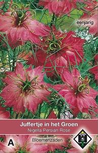 Nigella damascena Persian Rose