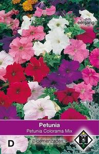 Petunia nana compacta Colorama Mix