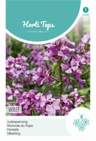 Lunaria Annua (Biennis) Violet (Judaspenning)