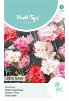 Dianthus Plum. Dbl.Bl.Gem. Spring Beauty