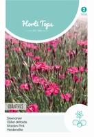 Dianthus Deltoides Erectus Karmijnrose