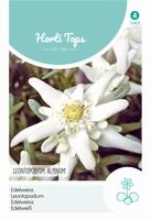 Leontopodium Alpinum (Edelweiss)