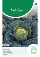 Savooiekool Vertus 3  (Grote Late Groene)