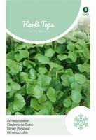Postelein Winter / Claytonia Perfoliata