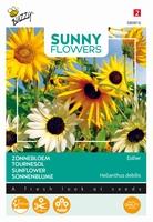 Helianthus zonnebloemen, Esther gemengde tinten, 140cm hoog