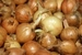 Plantui, Sturon 1000gr zeer goed bewaarbaar